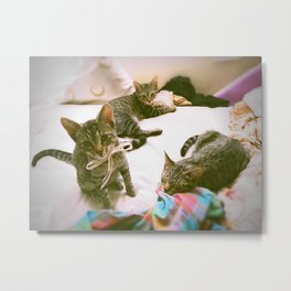 All 3 Kittens Together! Metal Print