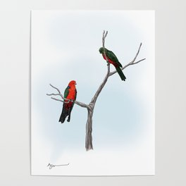 King Parrots Poster