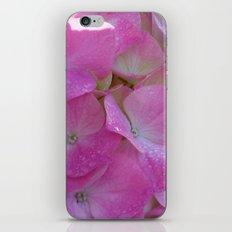 Raindrops on Hydrangeas iPhone & iPod Skin