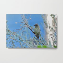 Spying September Goldfinch Metal Print