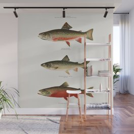 Illustrated North American Freshwater Trout Game Fish Identification Chart Wall Mural