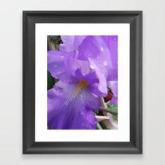 Iris Dew Framed Art Print