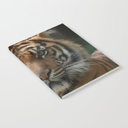 Look into my eyes by Teresa Thompson Notebook