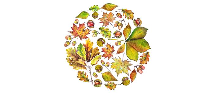 Autumn forest composition Coffee Mug