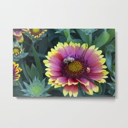 Beautiful red Sunflower with Bee Metal Print