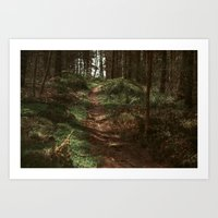Finding Forestry Art Print