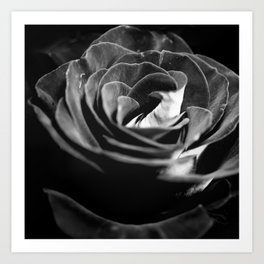Dark Black and White Rose Art Print