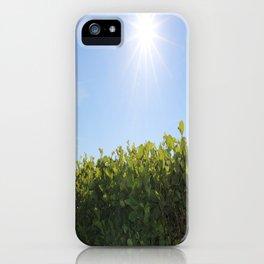Summer Photos, Nature Photography, fine art gifts, Landscape Photo, sunshine photo iPhone Case