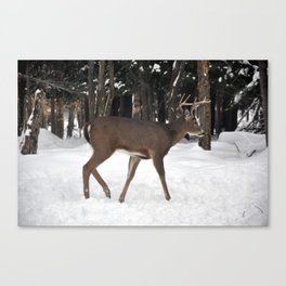Buck in Winter snow Canvas Print