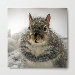 Adorable Praying Squirrel..Feed ME!! Metal Print