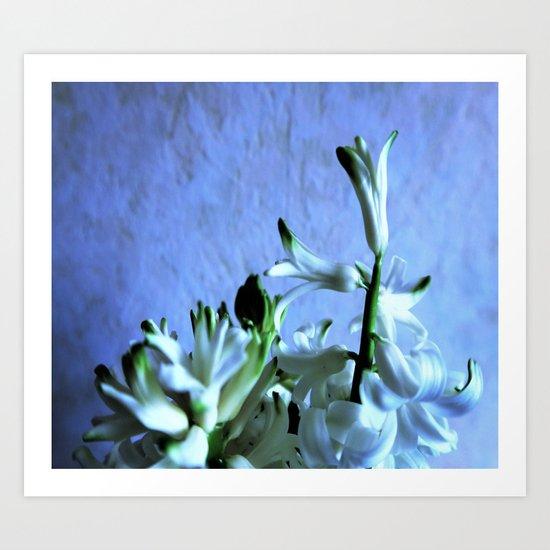white hyacinthe on light blue background Art Print