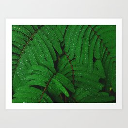 Layers Of Wet Green Fern Leaves Patterns In Nature Art Print
