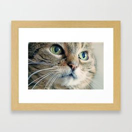 My Sweet Lilly the Cat Framed Art Print