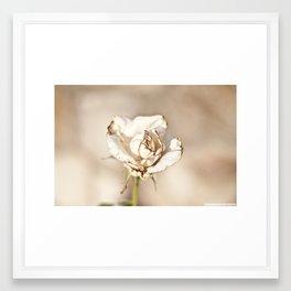 White Rose Framed Art Print