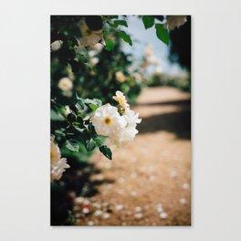 Down the Garden Path, No. 2 Canvas Print