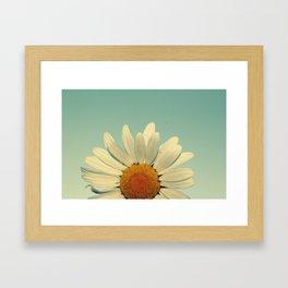 more daisies. Framed Art Print