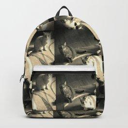 Gatos Backpack
