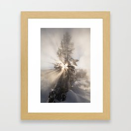 Winter Tree - Yellowstone Framed Art Print