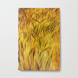 Wild Grass Burnished By The Sun Metal Print