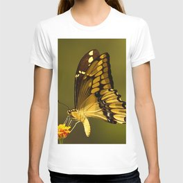 Giant Swallowtail Butterfly T-shirt