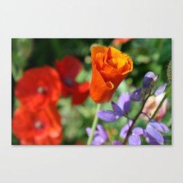 Orange Poppy Unfurling in Haines, Alaska by Mandy Ramsey Canvas Print