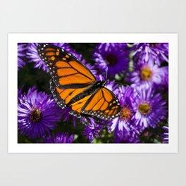 Monarch Butterfly 1 Art Print
