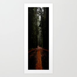 Avenue of the Giants - Vertical Panarama Art Print
