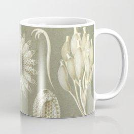 Naturalist Sponges Coffee Mug