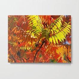 Japanese Rowan in Autumn Colours Metal Print