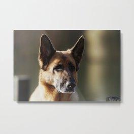 German Shepherd at Work Metal Print