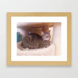 Tabby Kity Cat Rey Framed Art Print