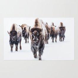 Bison, American Animal, Bufallo, Winter Rug