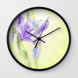 Flag iris in spring sunlight on a bright sunburst Wall Clock