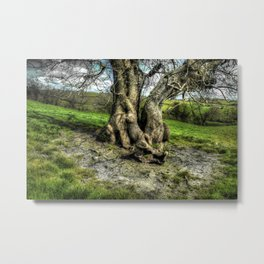 A tree in a pool of light Metal Print