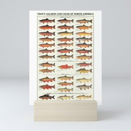Illustrated Trout, Salmon and Char Fishing Identification Chart of North America Mini Art Print