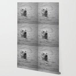 seal in the sea Wallpaper