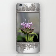 Bee Balm named Panorama Lavender iPhone & iPod Skin
