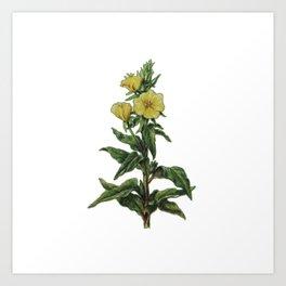 natural flower Art Print