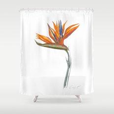 Bird of Paradise 01 Botanical Flower Shower Curtain