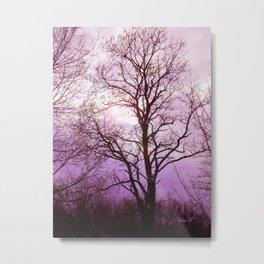 Winter Sky Metal Print