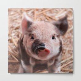 Sweet piglet Metal Print