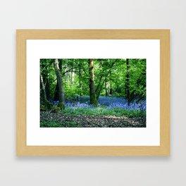 The Bluebell Dell Framed Art Print