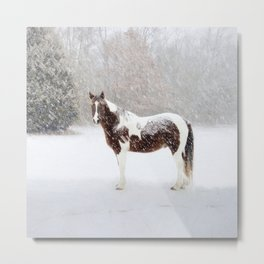 Pinto Horse In Snow Metal Print