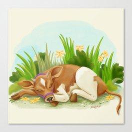 Sleepy Cow Canvas Print