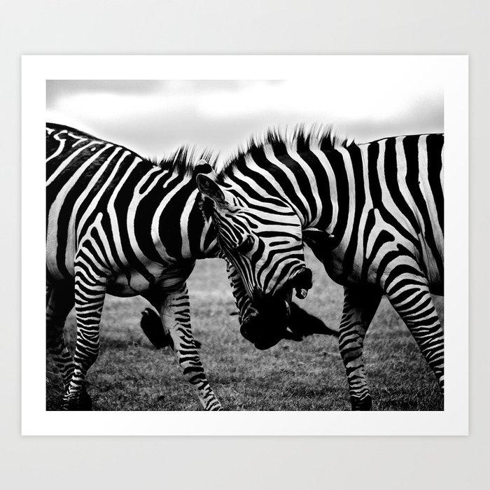 Wildlife zebra black adn white photography society6 art