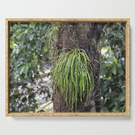Epiphyte growth on tree in rainforest Serving Tray