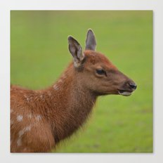Baby Elk Canvas Print