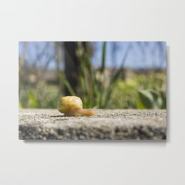 Snail on rock under sunlight Metal Print