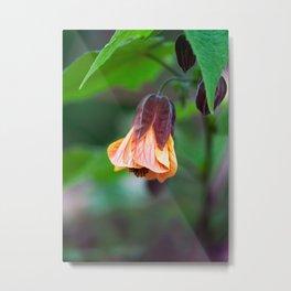 Coral Flowering Maple Metal Print