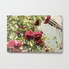 Vintage Rose II  | Pastel Color | Street Photography | Flower Photography | Fine Art Photo Print Metal Print